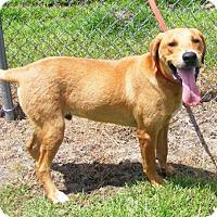 Adopt A Pet :: Bear - New Bern, NC