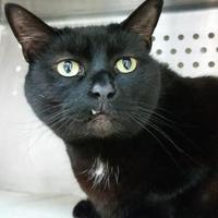 Adopt A Pet :: Kiwi - Williamsburg, VA