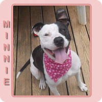 Adopt A Pet :: MINNIE - Dallas, NC
