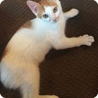 Adopt A Pet :: Leo - Mt Pleasant, PA