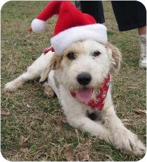 Terrier (Unknown Type, Medium) Mix Dog for adoption in Portsmouth, Rhode Island - Suzy-local!