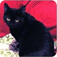 Adopt A Pet :: Kirby - Toronto, ON