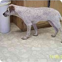 Adopt A Pet :: Oliver - Wakefield, RI