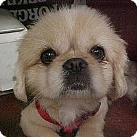 Adopt A Pet :: E I L Y - Cathedral City, CA