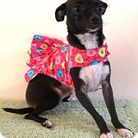 Adopt A Pet :: Candy - Osseo, MN