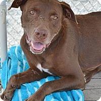 Adopt A Pet :: Clint - Athens, GA