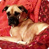 Adopt A Pet :: Nala- Adopted! - Turnersville, NJ