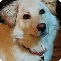 Adopt A Pet :: Beka - New Canaan, CT