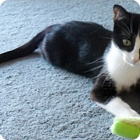 Adopt A Pet :: nana - brewerton, NY