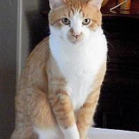 Adopt A Pet :: Tyler - Prescott, AZ