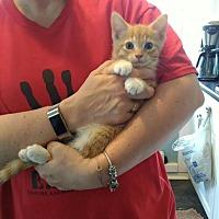 Adopt A Pet :: Custer - Salamanca, NY