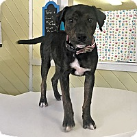 Adopt A Pet :: Mighty Jane - Sidney, ME