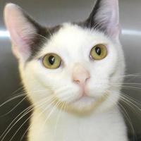 Adopt A Pet :: Furrari - Victoria, TX