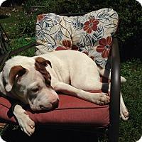 Adopt A Pet :: Delilah-Pending Adoption - Lancaster, PA