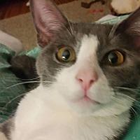 Adopt A Pet :: Priscilla - Virginia Beach, VA