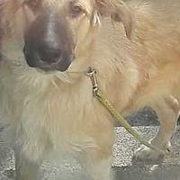 Adopt A Pet :: Louie - Clear Lake, IA
