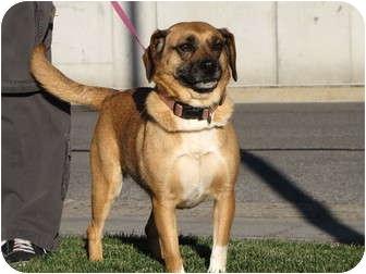 Beagle/Pug Mix Dog for adoption in Roosevelt, Utah - Sissy