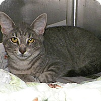 Adopt A Pet :: Trixie - Dover, OH