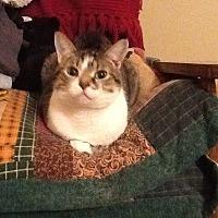 Adopt A Pet :: Gracie - Wakinsville, GA
