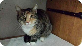 Domestic Mediumhair Cat for adoption in Columbus, Ohio - Mimi