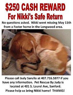 Coonhound/Treeing Walker Coonhound Mix Dog for adoption in Sanford, Florida - Nikki-  MISSING