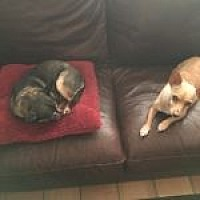 Adopt A Pet :: Rocky, Rainbow, Katie - Austin, TX