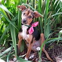 Adopt A Pet :: Fiorella - Freeport, ME