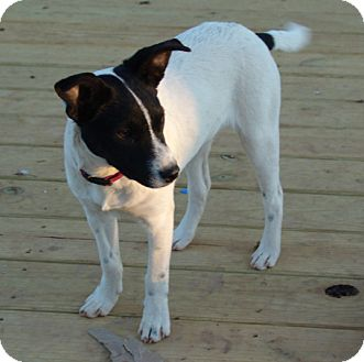 Mixed Breed (Small) Mix Puppy for adoption in Staunton, Virginia - rey
