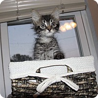Adopt A Pet :: Mariah - Daleville, AL