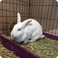 Adopt A Pet :: George - Elizabethtown, KY
