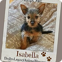 Adopt A Pet :: ISABELLA - Lincoln, NE
