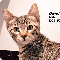 Adopt A Pet :: David - Lincoln, NE