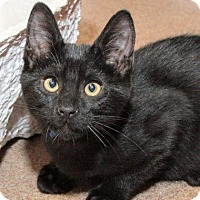 Adopt A Pet :: Ralston - San Francisco, CA