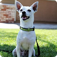 Adopt A Pet :: Oliver - Yuba City, CA
