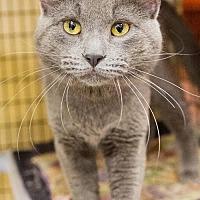 Adopt A Pet :: Greystone - St. Paul, MN