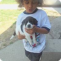 Adopt A Pet :: Turner - Cincinnati, OH