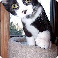 Adopt A Pet :: Rufus - Sheboygan, WI