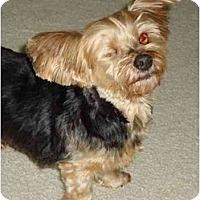 Adopt A Pet :: Spencer - Charlotte, NC