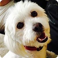 Adopt A Pet :: Marcie - La Costa, CA