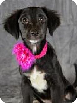 Labrador Retriever Mix Dog for adoption in Jackson, Mississippi - Meaghan