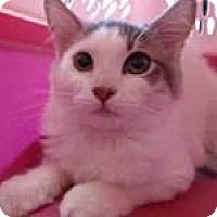 Adopt A Pet :: Ellie - Sacramento, CA