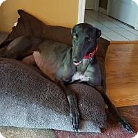 Adopt A Pet :: Kara - Knoxville, TN