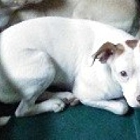 Adopt A Pet :: L.C. - Glenwood, GA