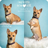 Welsh Corgi/Chihuahua Mix Dog for adoption in Voorhees, New Jersey - Quincy