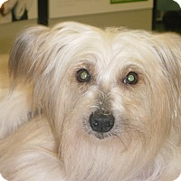 Adopt A Pet :: Milo 2017 (m/c) Adopt. Pend. - Chesterfield, MI