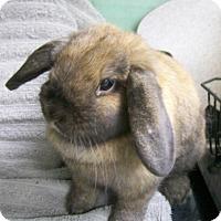Adopt A Pet :: Penelope - Harrisburg, PA