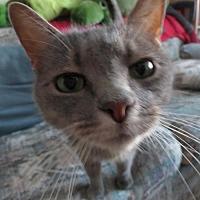 Adopt A Pet :: Jimmy K. (aka Kobe) - Ventura, CA
