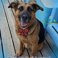 Adopt A Pet :: Leonard - Warkworth, ON