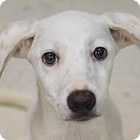 Adopt A Pet :: WYOMING - Kyle, TX