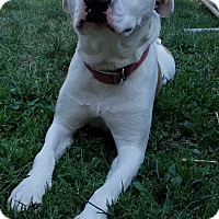 Adopt A Pet :: Zeek-Foster needed! - Detroit, MI